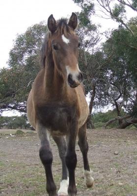 foals_2010_apr_025_400