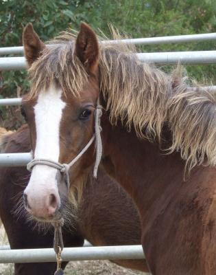 foals_2010_apr_036_400
