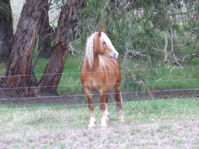 foals_2010_apr_037_400