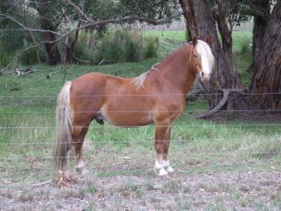 foals_2010_apr_046_400