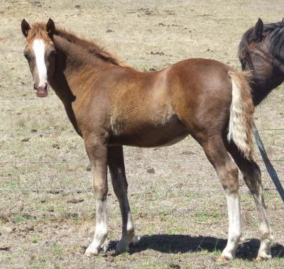 foals_2012_042_400