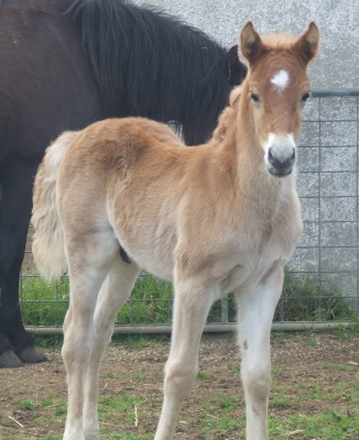 rhiannons_colt_foal_08.jpg2_400