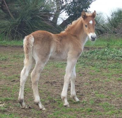 rhiannons_colt_foal_08_400