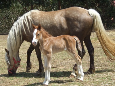 rosannah__filly_foal_400