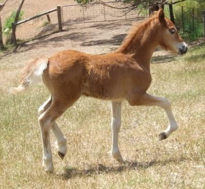 yasmins_colt_foal_400